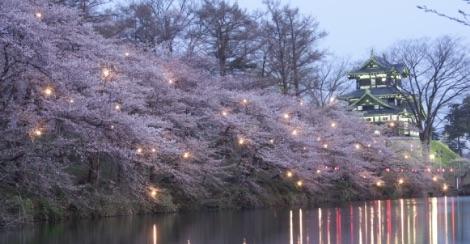 高田公園の桜の画像