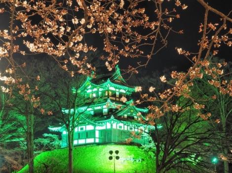 高田城公園の桜のライトアップ画像