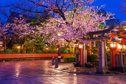 祇園白川の桜のライトアップ画像