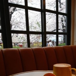 中目黒の桜の画像