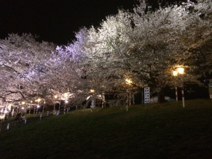 おおがわら桜まつりのライトアップ
